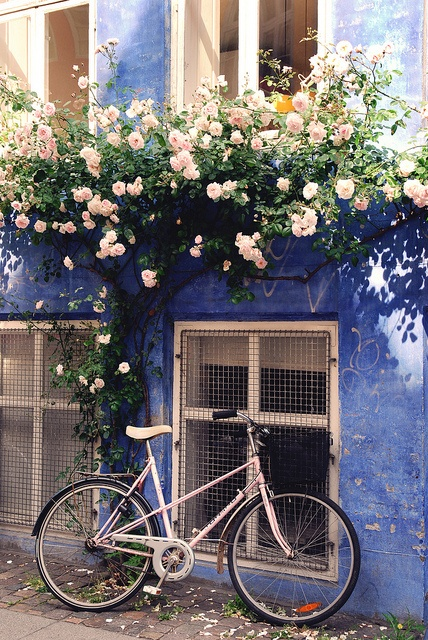 Blooms and Bikes, Denmark